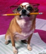 funny-dog-writer-animal-wallpapers